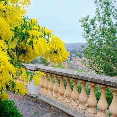 أزهار تعطّر حدائقنا مع انطلاقة الربيع