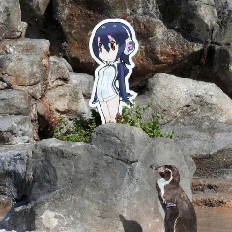 """اليابانيون يبكون البطريق الذي أغرم بـ""""هولولو"""""""