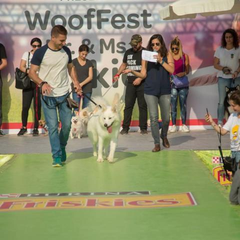 Woof-Fest مهرجان كبير للكلاب في لبنان