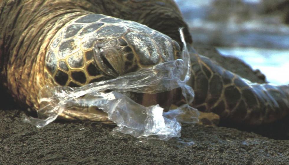 انتصار للبيئة في المغرب وفرنسا مع منع استخدام الأكياس البلاستيكية!