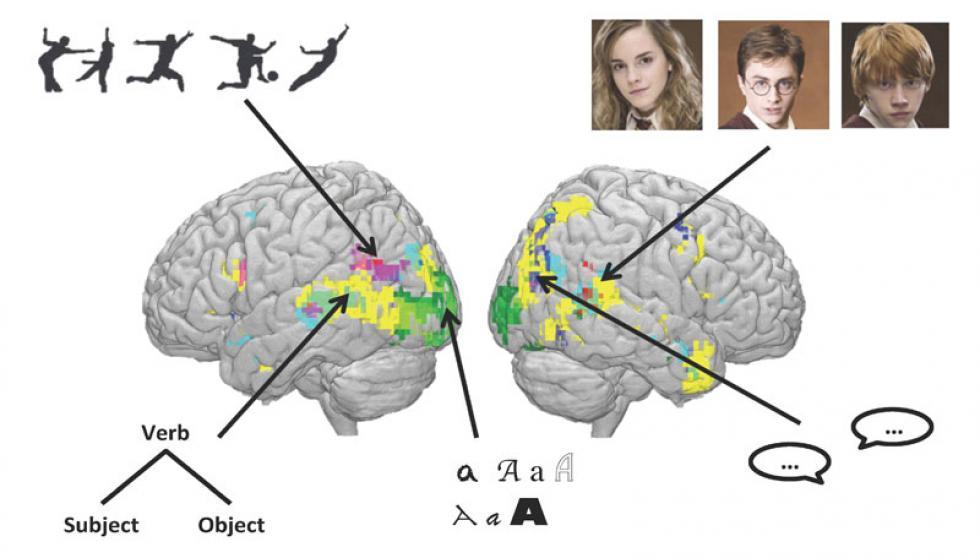 سِحرُ «هاري بوتر» يفكُّ أسرار الدّماغ؟